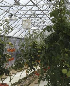 greenhouse_left